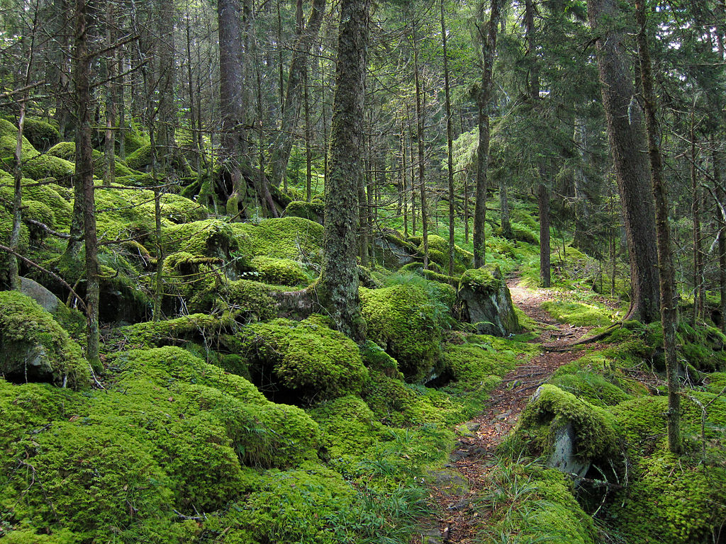 Baxter Trail in the Great Smoky Mountains