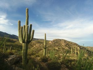 Rincon Mountains viewed from the Saguaro National Park