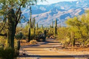 Saguaro National Park and cacti