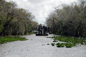 Tour the Everglades as part of REI National Park programs