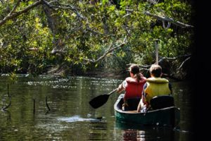 Paddling downriver at Everglades National Park