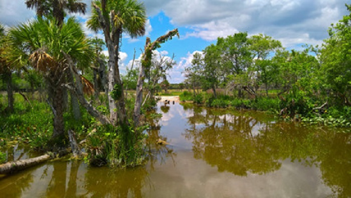 View of the vegetation in Everglades National Park