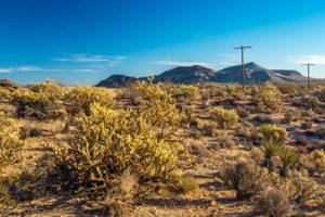 Mojave Desert-Cima Dome at Mojave National Preserve