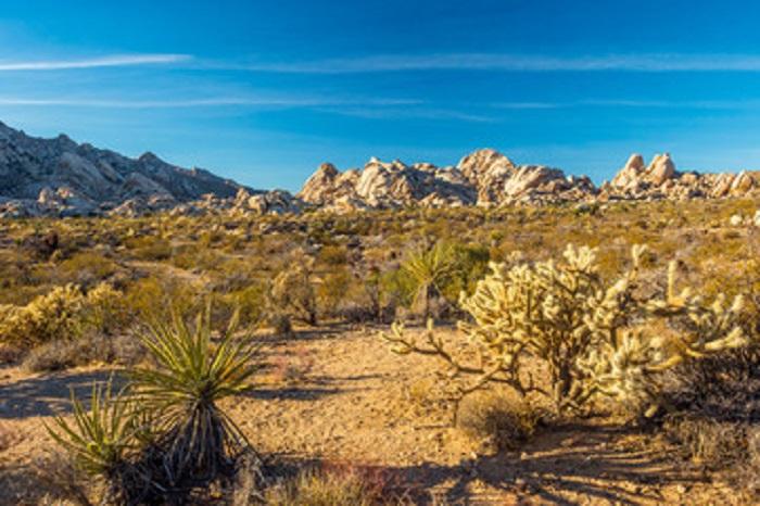 Mojave Desert at Mojave National Preserve