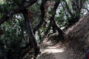 Ewoldsen Trail at Julia Pfeiffer Burns State Park