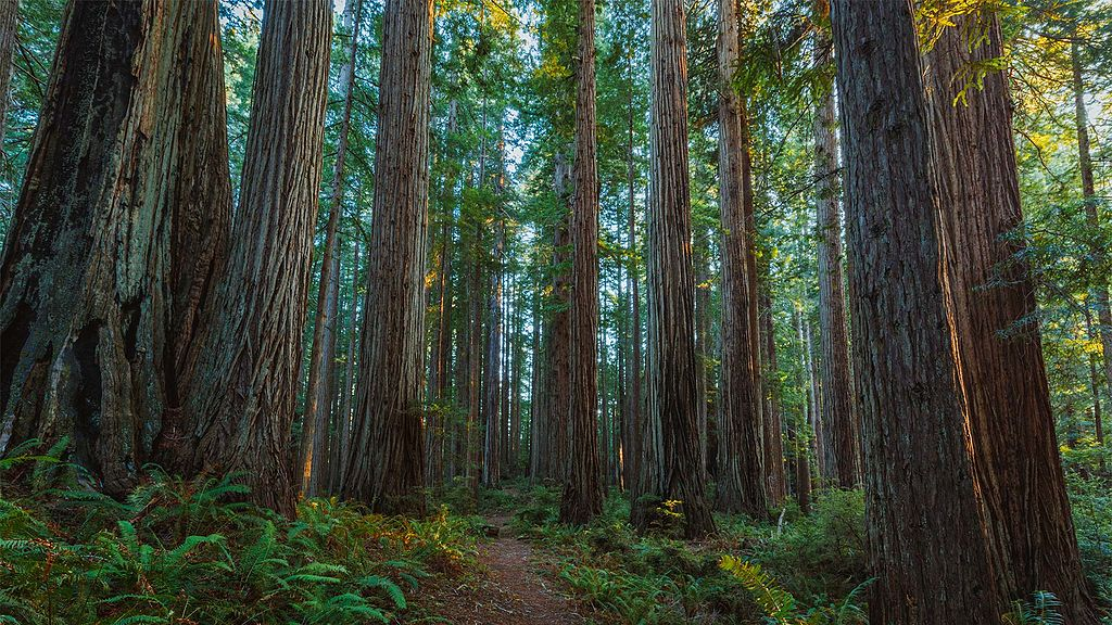 5 Things to Do in the Prairie Creek Redwoods State Park