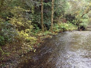 Creek at Prairie Creek Redwoods State Park