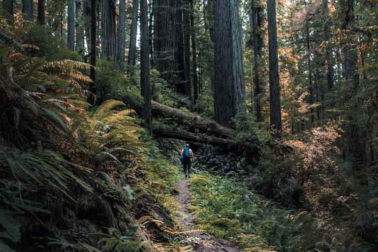 IMMERSING YOURSELF IN NATURE AT PRAIRIE CREEK REDWOODS STATE PARK
