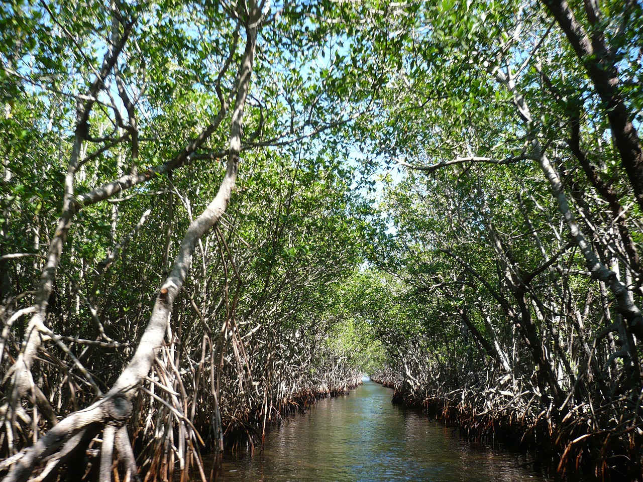 Mangroves at the Everglades Nation Park