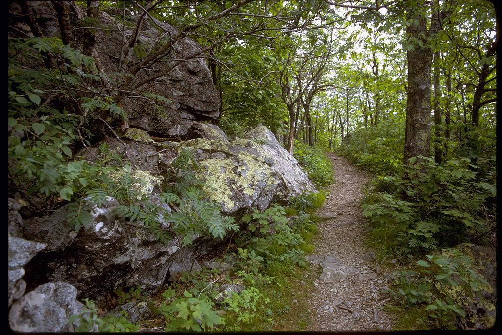 Trail at Shenandoah National Park